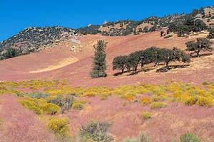 The lovely colors along Jawbone Canyon Road