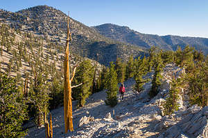 Lolo sets out on the Methuselah Trail