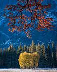 Ahwahnee Meadow